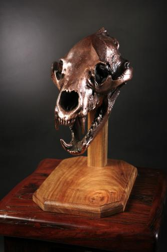 Black Bear skull