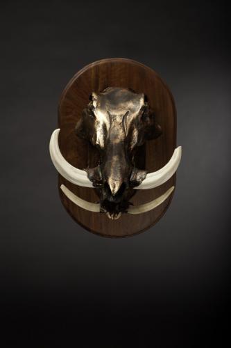 Warthog Copper Skull mount