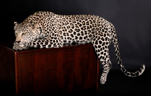 Leopard-Desk-Mount
