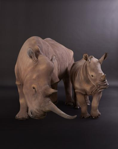 Rhino-Mom-Baby