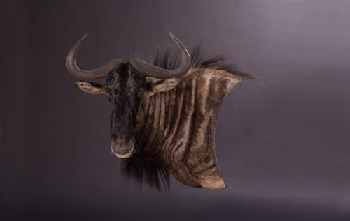 Blue-Wildebeest-Wall-Pedestal