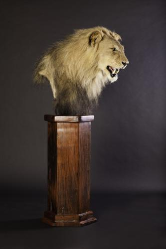 Lion Pedestal Side
