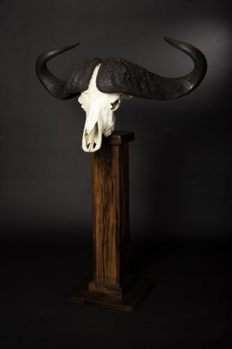 Buffalo Skull Pedestal angled