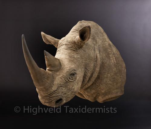 White-Rhino side