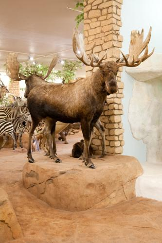 Moose full mount