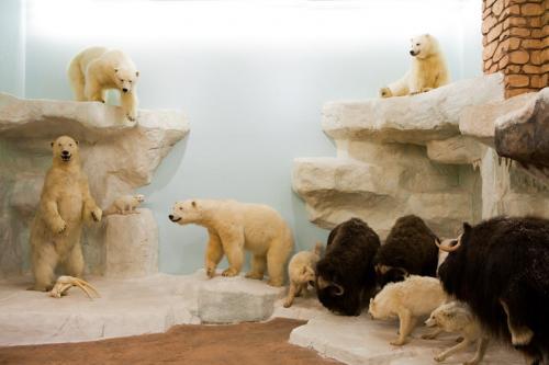Polar Bear Scene