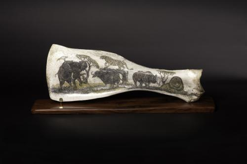 Buffalo Scapula with etching