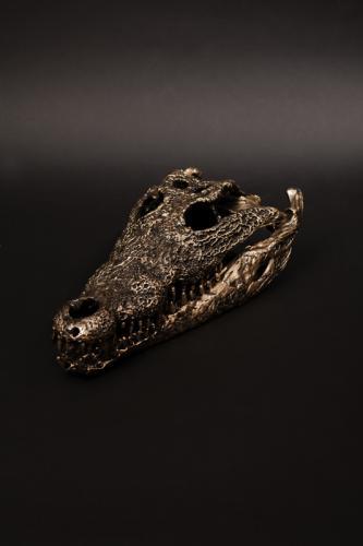 Plated Crocodile skull