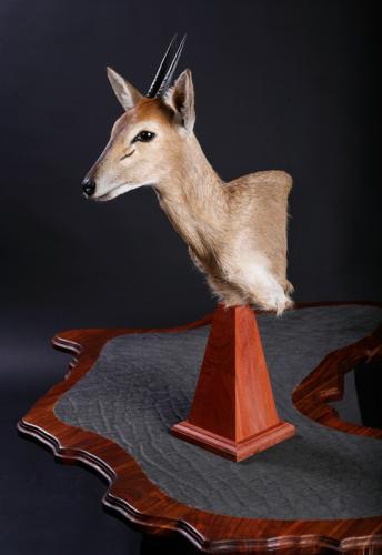 Duiker-Pedestal
