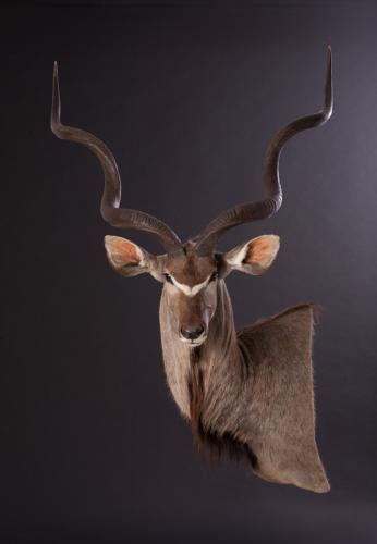 Kudu-Wall-pedestal
