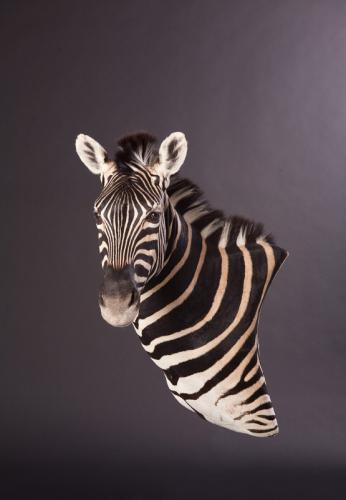 Zebra-Wall-Pedestal
