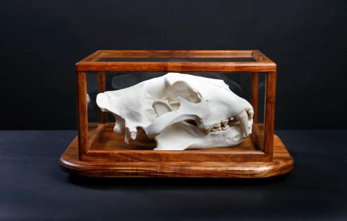 Lion-Skull-Glass-Case-Side