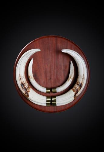 Warthog-Tusks-Brass-Caps