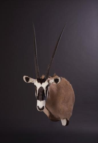 Gemsbok-Drop-Shoulder-45