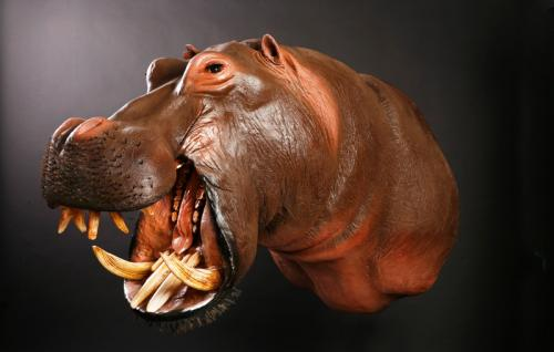 Hippo-Mouth-Open