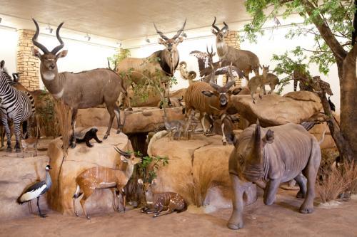 African Animals Scene