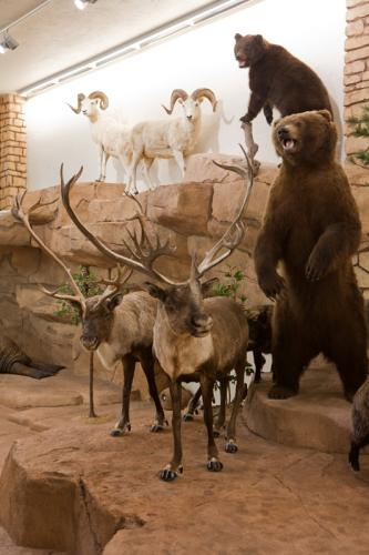 Bear and Karibou Scene