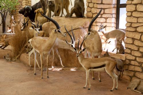 Gazelle Group Landscape