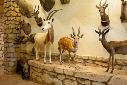 Scimitar Oryx scene