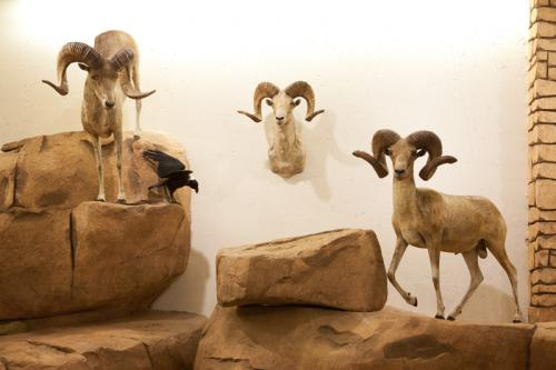 Three Sheep 2